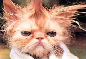 cat bad hair day